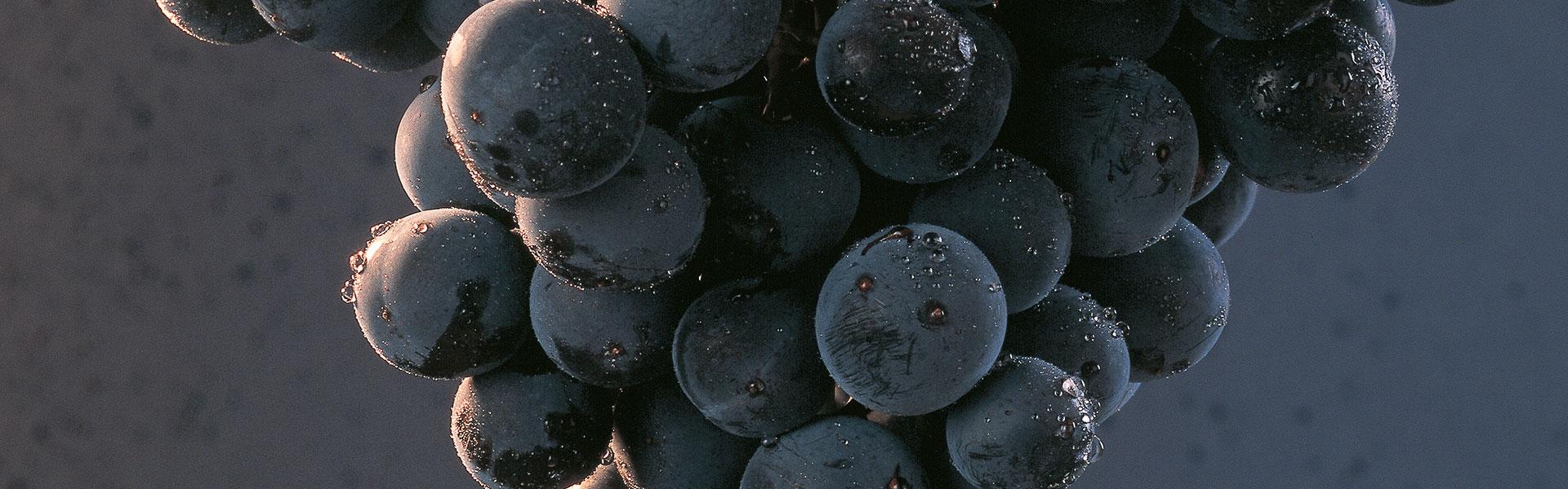 Bodegas Ondalán. Racimo de uvas