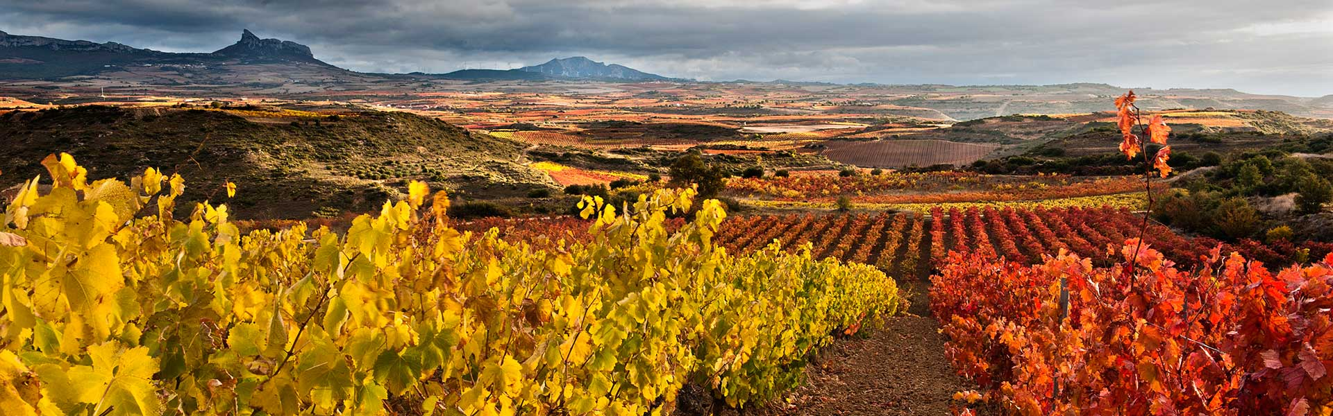 Bodegas Ondalán. Paisaje de viñedo de Rioja Alavesa